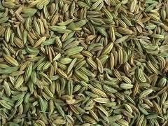 茴香籽提取物