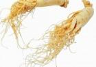 人参皂苷的植物细胞培养生产