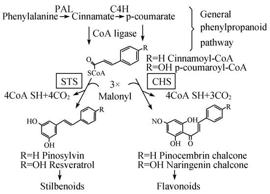 一、3,5-二甲氧基苄醇(2)的合成 3,5-二甲氧基苯甲酸(5.0g,27.5mmol)加至无水乙醚(150 ml)中,搅拌下分批加入LiAlH4(1.0g,26.3mmol),微回流反应18h。缓慢滴加稀盐酸至无气泡产生且未分层时停止,得灰色混悬液。过滤,滤液减压浓缩回收乙醚,残余物静置后凝固成白色固体(2)(4.
