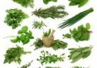 宁波植物提取物出口2012年超3.7亿元