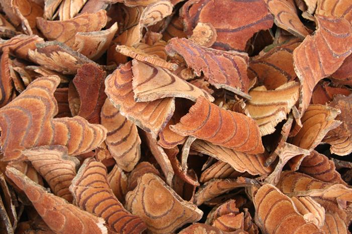 木质茎横切结构图