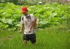 植物提取物抗菌剂